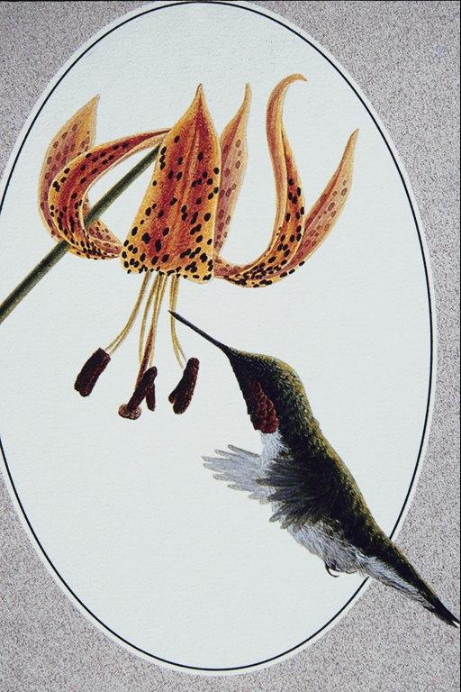 Рисунки птиц реклама рисунки птиц 42 100