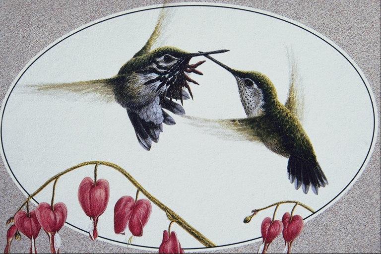 591099 disegni di uccelli uccelli animali foto - Semplici disegni di uccelli ...
