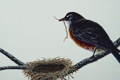 Рисунки птиц 100 100