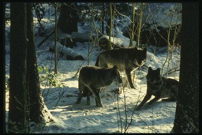 http://pix.com.ua/db/animals/wild/predators/m-42088.jpg