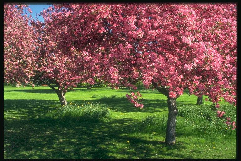 Весенний пейзаж деревья в красном