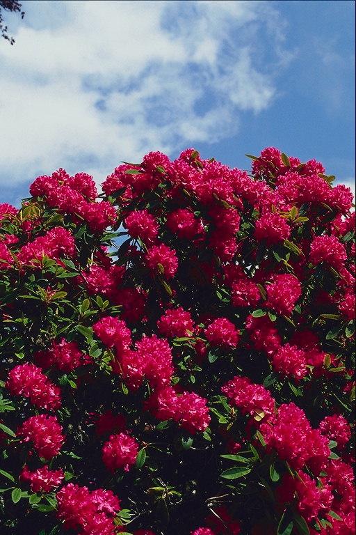 Фото природа квіти красиві квіти ar