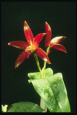 Rojas fotos orquideas Las orquídeas