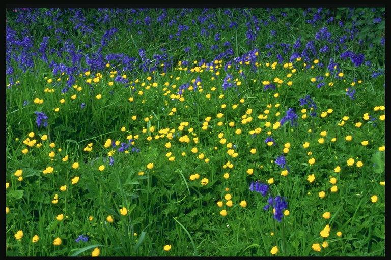 ... цветы мир фото прочее текстуры: pix.com.ua/ru/other/textures/natures_textures/366040-upsee.html